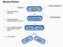 0714 The Process Of Binary Fission Medical Images For Powerpoint