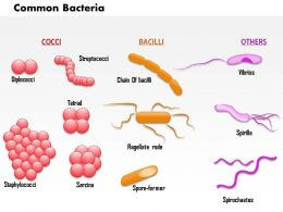 0814_common_bacteria_infecting_human_medical_images_for_powerpoint_Slide01