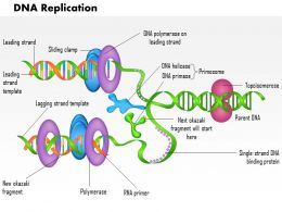 0814_dna_replication_medical_images_for_powerpoint_Slide01