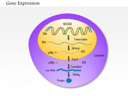 0814 Gene Expression Medical Images For PowerPoint