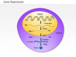 0814_gene_expression_medical_images_for_powerpoint_Slide01
