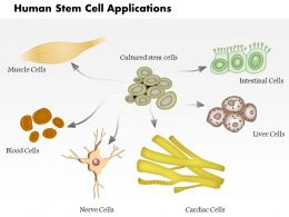 0814 Human Stem Cell Applications Medical Images For PowerPoint