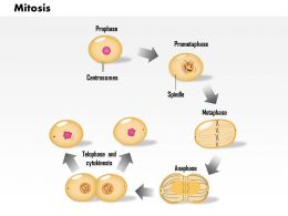0814 Mitosis Cell Division Medical Images For PowerPoint