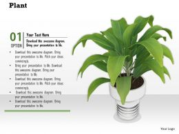 0814 Plant Potted Environment For Natural Beauty Graphics For Powerpoint