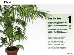 0814 Plant Potted Nature Environment Concepts Graphics For Powerpoint