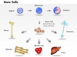 0814 Pluripotent Embryonic Stem Cells Originate As Inner Cell Mass Cells Medical Images For PowerPoint