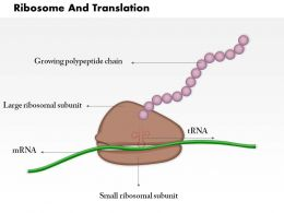 0814 Ribosome And Translation Medical Images For PowerPoint