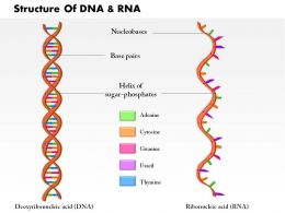 0814 Structure DNA And RNA Molecule Medical Images For Powerpoint
