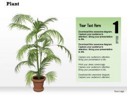 0814 Tall Plant Potted For Environment Natural Beauty Graphic Image Graphics For Powerpoint