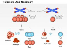 0814 Telomere And Oncology Medical Images For Powerpoint