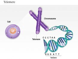 0814 Telomere Medical Images For Powerpoint