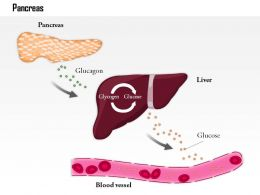 0814 The Pancreas Releases Glucagon When Blood Glucose Levels Fall Too Low Medical Images For PowerPoint