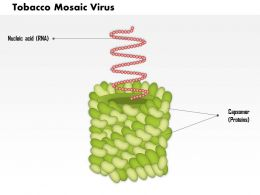 0814 Tobacco Mosaic Virus Medical Images For Powerpoint