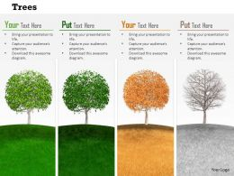 0814 Trees To Show Four Different Seasons Image Graphics For PowerPoint