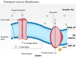 0814 Types Of Transport Across Membranes Medical Images For PowerPoint