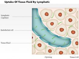 0814 Uptake Of Tissue Fluid By Lymphatic Medical Images For PowerPoint