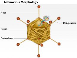 0914 Adenovirus Morphology Medical Images For PowerPoint