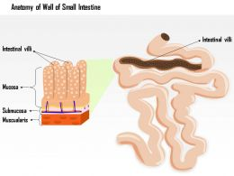 0914 Anatomy Of The Wall Of The Small Intestine Medical Images For Powerpoint