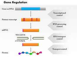 0914 Gene Regulation Medical Images For PowerPoint