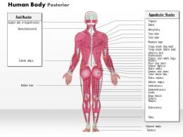 0914 Human Body General Posterior Medical Images For PowerPoint