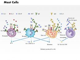 0914 Mast Cells Medical Images For PowerPoint