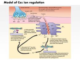 0914_model_of_ca2_ion_regulation_by_the_sarcoplasmic_reticulum_in_muscle_medical_images_for_powerpoint_Slide01