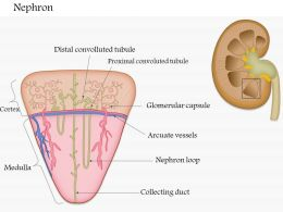 55954758 Style Medical 3 Neuroscience 1 Piece Powerpoint Presentation Diagram Infographic Slide