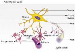 0914 Neuroglial Cells Astrocyte Medical Images For PowerPoint