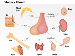 0914 Pituitary Hormone Functions Medical Images For PowerPoint