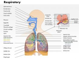 0914 Respiratory System Medical Images For PowerPoint