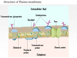 0914 Structure Of Plasma Membrane Medical Images For PowerPoint