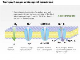 0914_transport_across_a_biological_membrane_medical_images_for_powerpoint_Slide01
