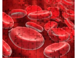 1114 3d Image Of Human Blood Cells Stock Photo