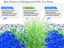 1114 Blue Flowers In Background With Text Boxes Image Graphic For Powerpoint