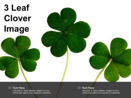 3 Leaf Clover Image