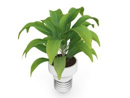 3D Graphic Of Green Plant Stock Photo