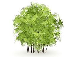 3D Graphic Of Indoor Green Plant Stock Photo