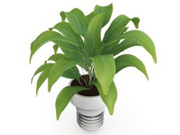 3D Plant On White Background Stock Photo