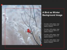 A Bird As Winter Background Image