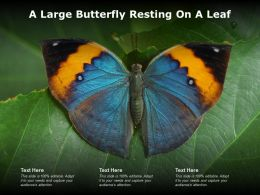 A Large Butterfly Resting On A Leaf