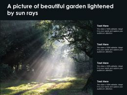 A Picture Of Beautiful Garden Lightened By Sun Rays