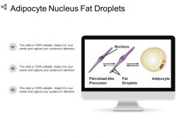 Adipocyte Nucleus Fat Droplets