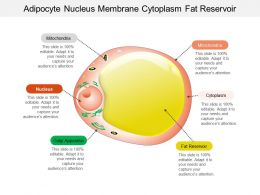 Adipocyte Nucleus Membrane Cytoplasm Fat Reservoir