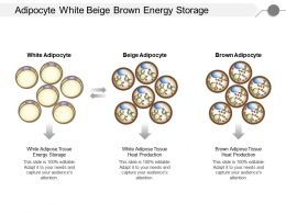 Adipocyte White Beige Brown Energy Storage