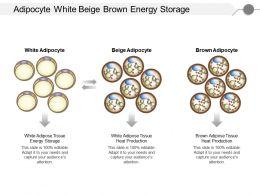 adipocyte_white_beige_brown_energy_storage_Slide01
