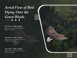 Aerial View Of Bird Flying Over The Green Woods
