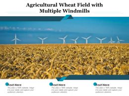 Agricultural Wheat Field With Multiple Windmills