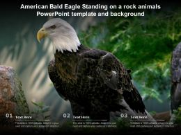 American Bald Eagle Standing On A Rock Animals Powerpoint Template And Background