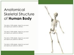 Anatomical Skeletal Structure Of Human Body