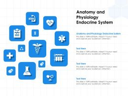 Anatomy And Physiology Endocrine System Ppt Powerpoint Presentation Icon Guidelines